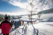 Winter-Wandertag in Willingen / Sauerland 39