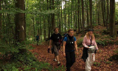 24h Wanderung im Schwarzwald 2 68