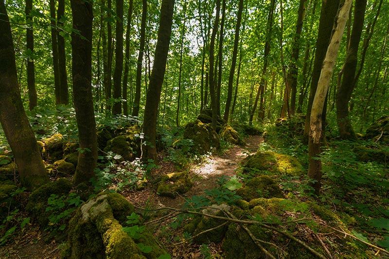 Ith-Hils-Weg - Top Wanderweg im Weserbergland 6