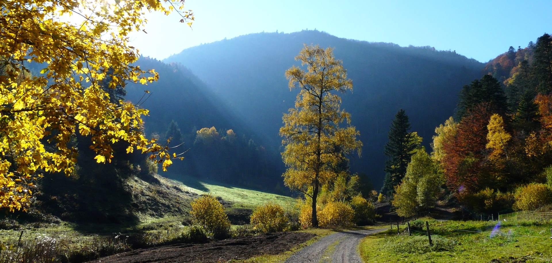 43.  Le Tour de la Vallée de la Thur -  Hochvogesen 1