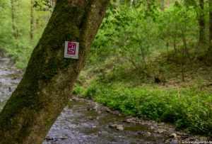 Bergschluchtenpfad Ehrenburg 31