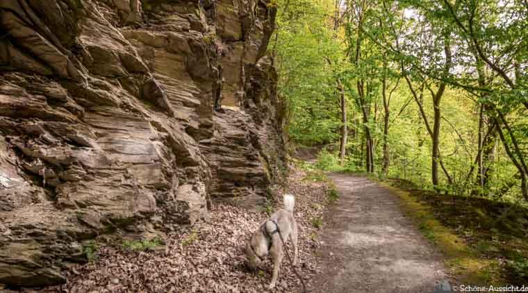 Masdascher Burgherrenweg - Faszinierend schöne Traumschleife. 17