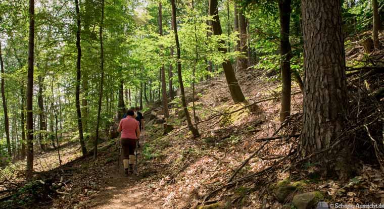Pfälzer Hüttentour - Die Pflichttour in der Pfalz 5