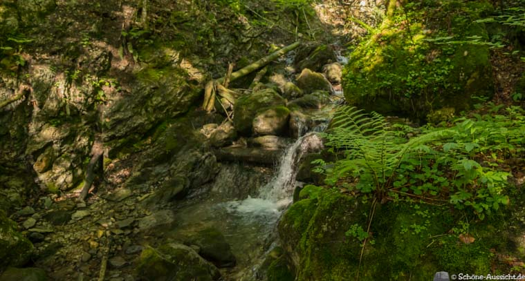 Wanderung zu den Thorau Almen 3