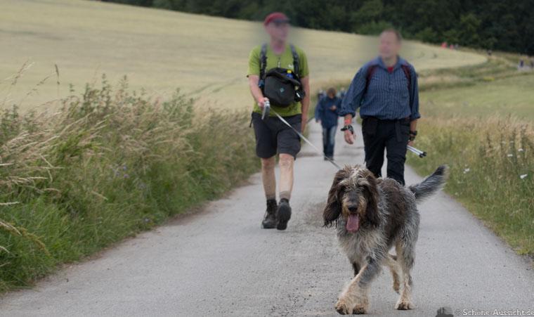 Extremwanderung mit Hund 1