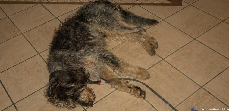 Extremwanderung mit Hund 4