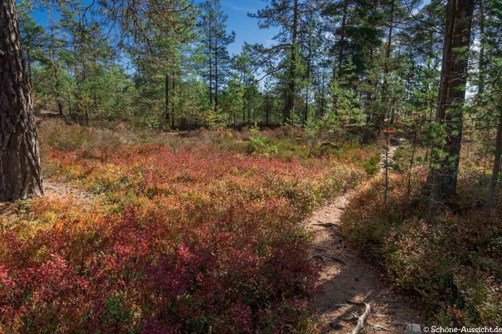Sörknatten Naturreservat - Auf den Spuren von Ronja Räubertochter 53
