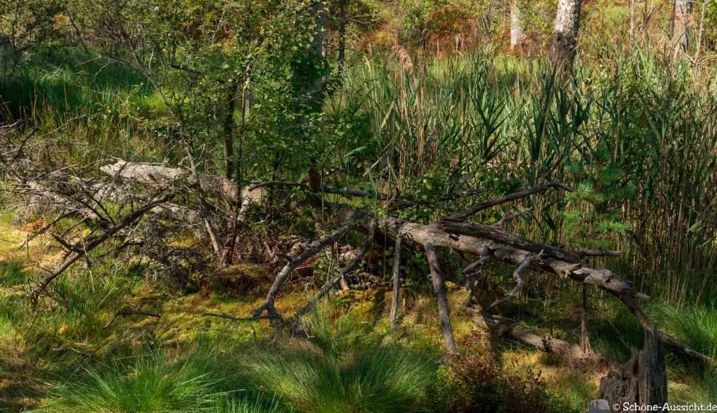 Sörknatten Naturreservat - Auf den Spuren von Ronja Räubertochter 48