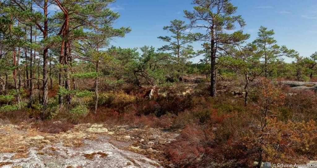 Sörknatten Naturreservat - Auf den Spuren von Ronja Räubertochter 45