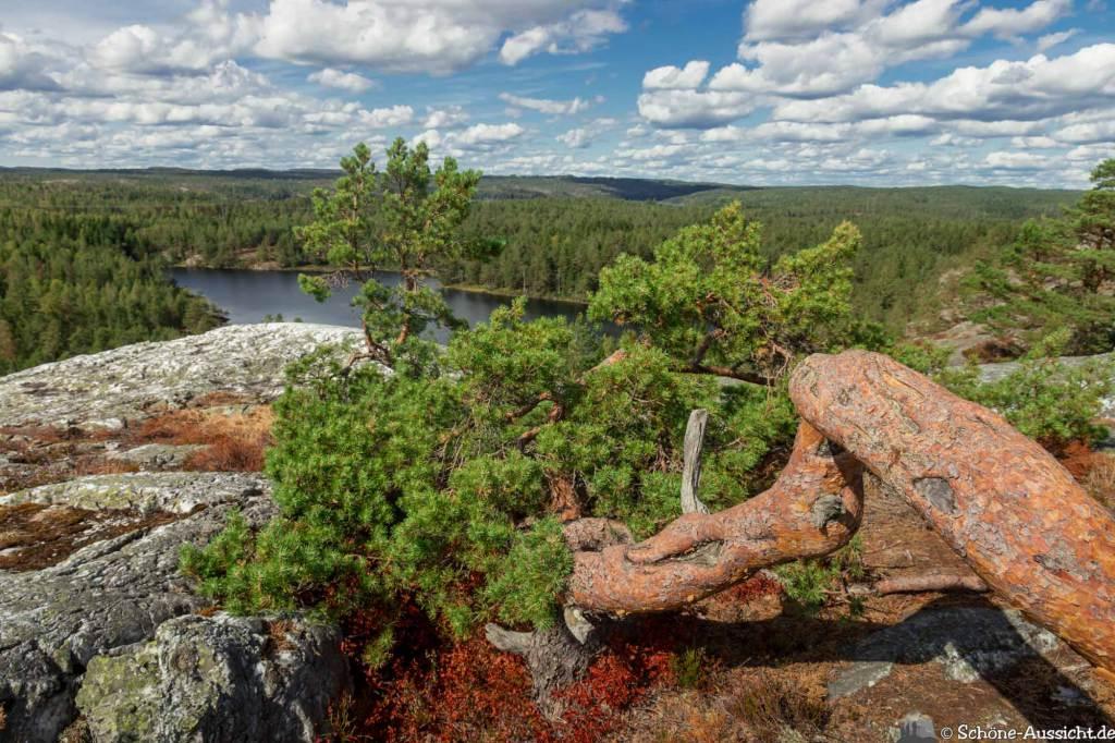 Sörknatten Naturreservat - Auf den Spuren von Ronja Räubertochter 65