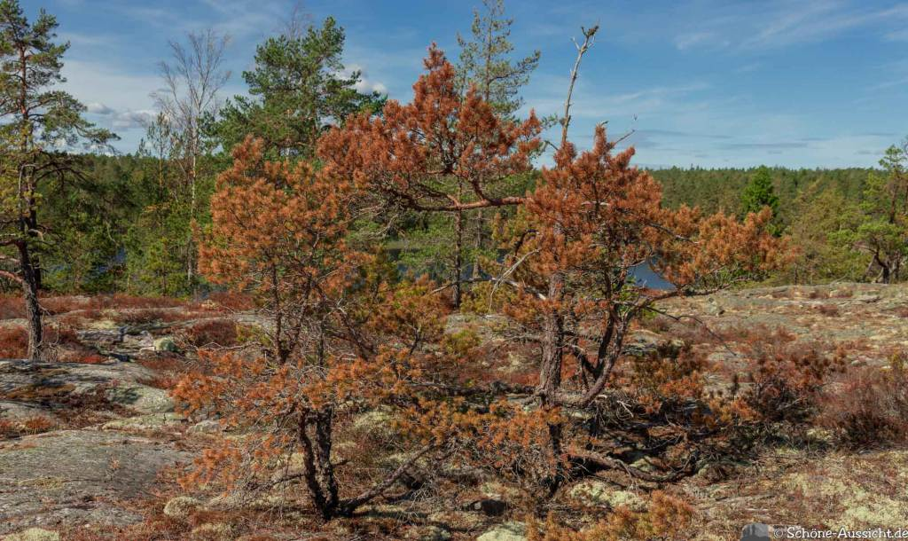 Sörknatten Naturreservat - Auf den Spuren von Ronja Räubertochter 56