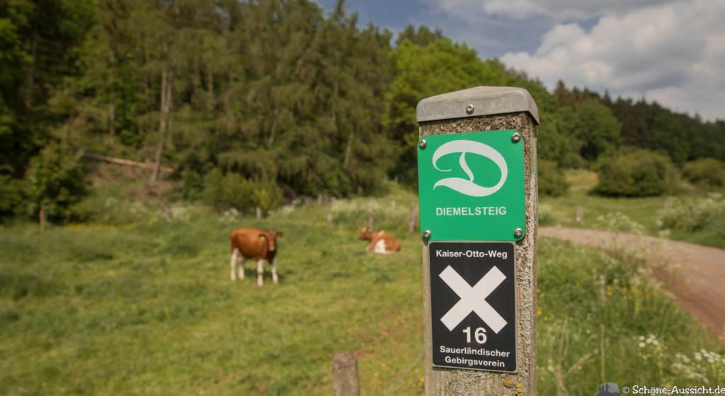 Der Diemelsteig - Uriger Wanderweg am Diemelsee 87