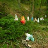 Müllkippe Laacher See