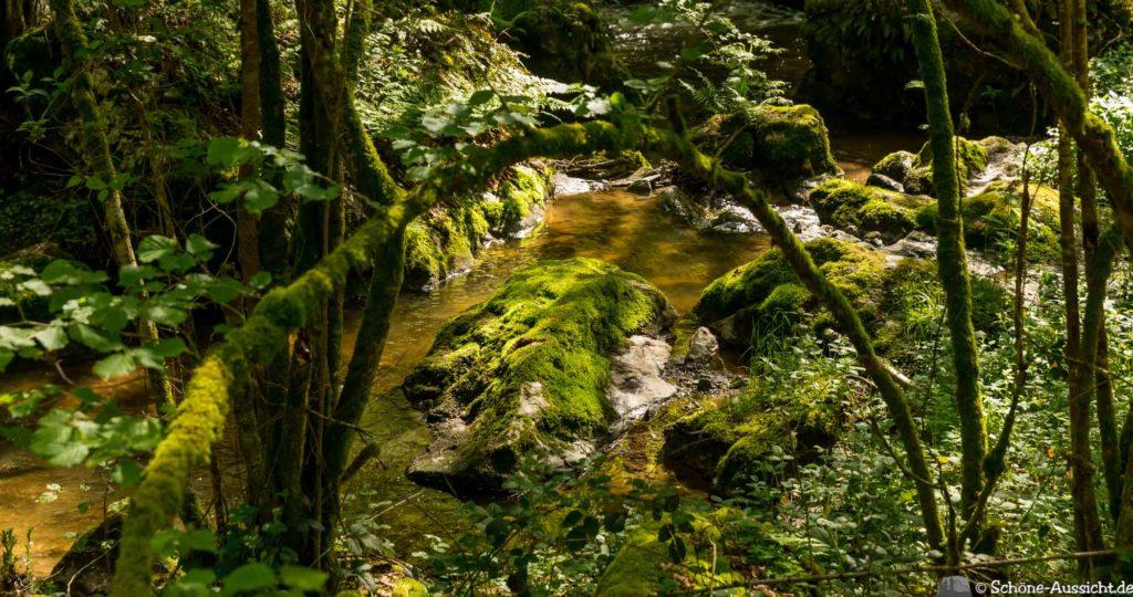 Oberstaufen - Von Steibis und den schönsten Wanderideen 24