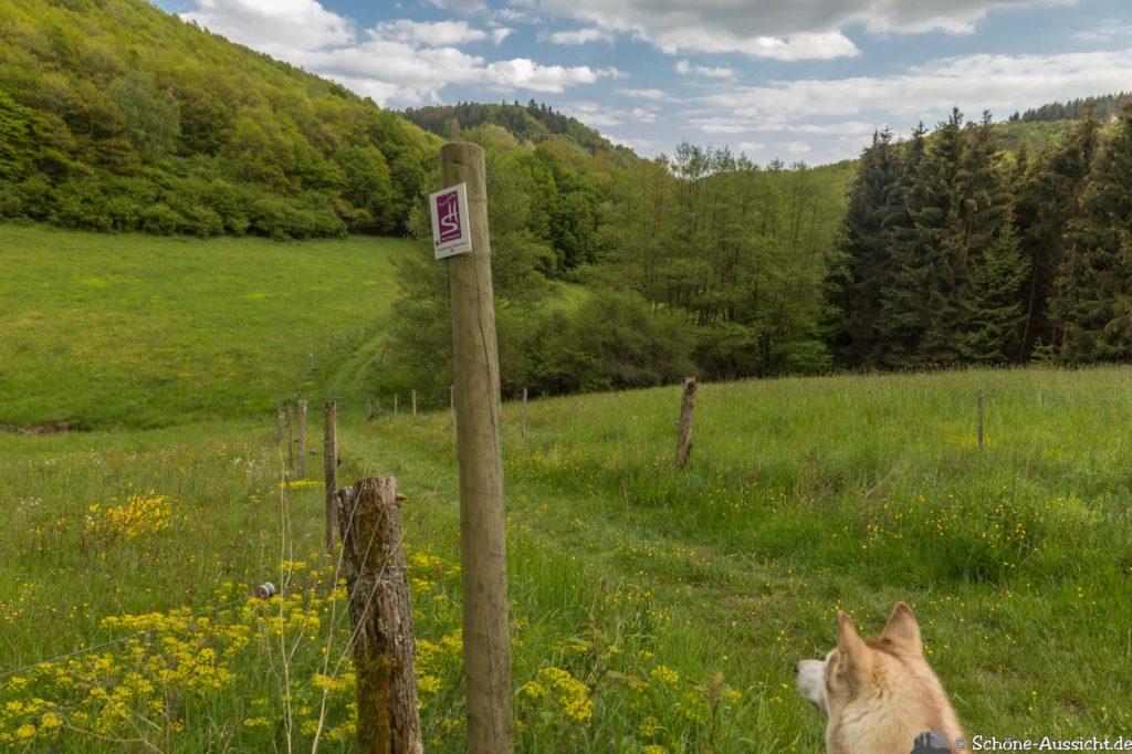 Oberstaufen - Von Steibis und den schönsten Wanderideen 36