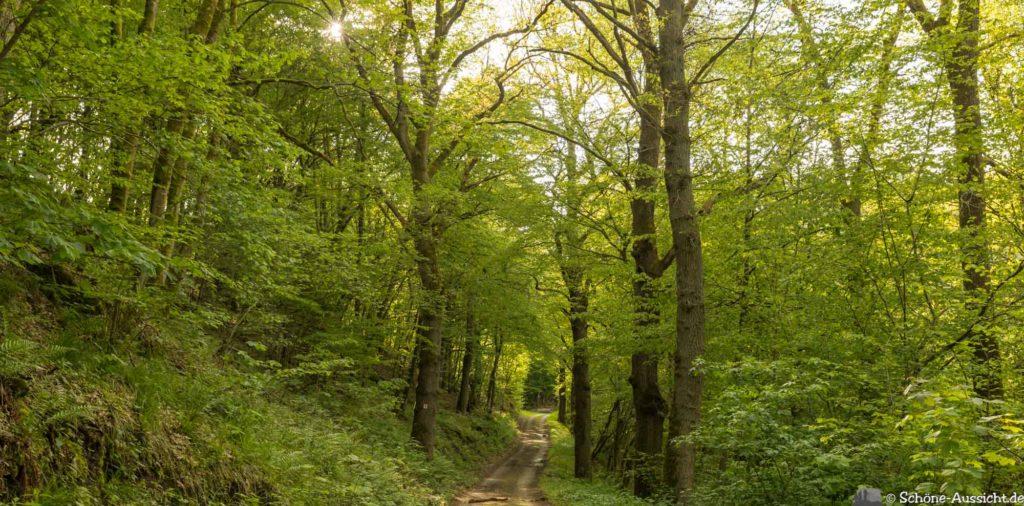 Oberstaufen - Von Steibis und den schönsten Wanderideen 40