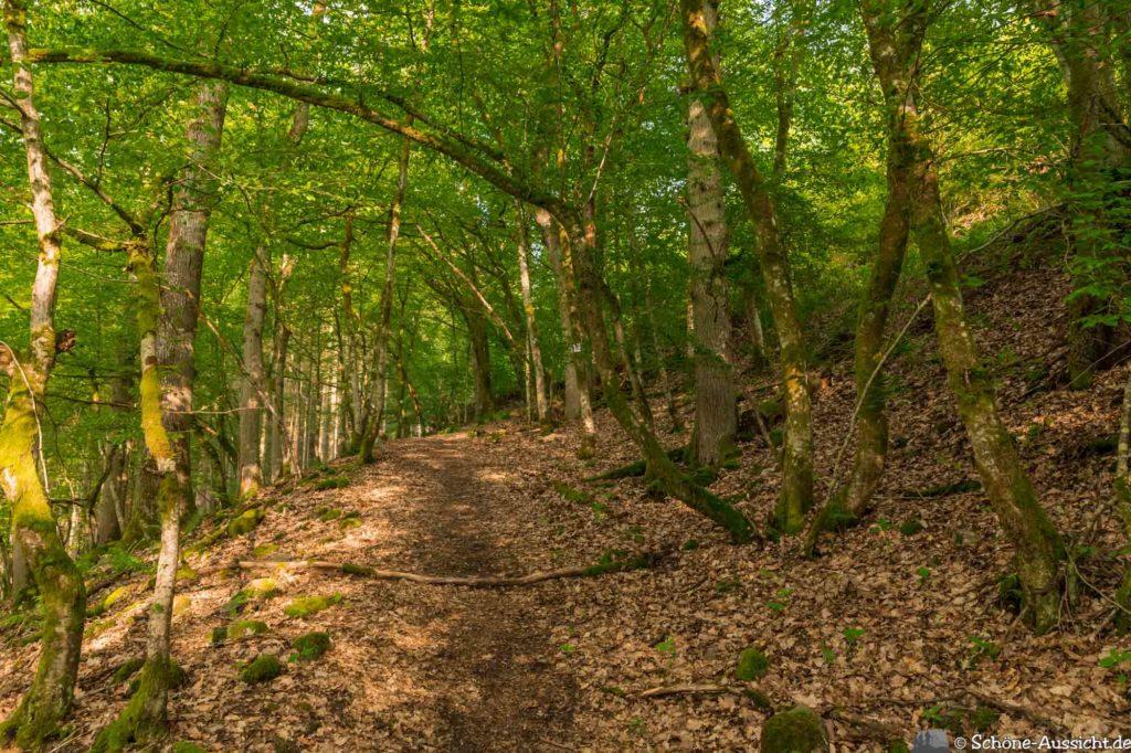Oberstaufen - Von Steibis und den schönsten Wanderideen 41