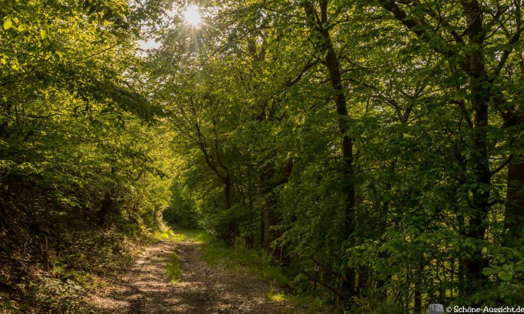 Oberstaufen - Von Steibis und den schönsten Wanderideen 42
