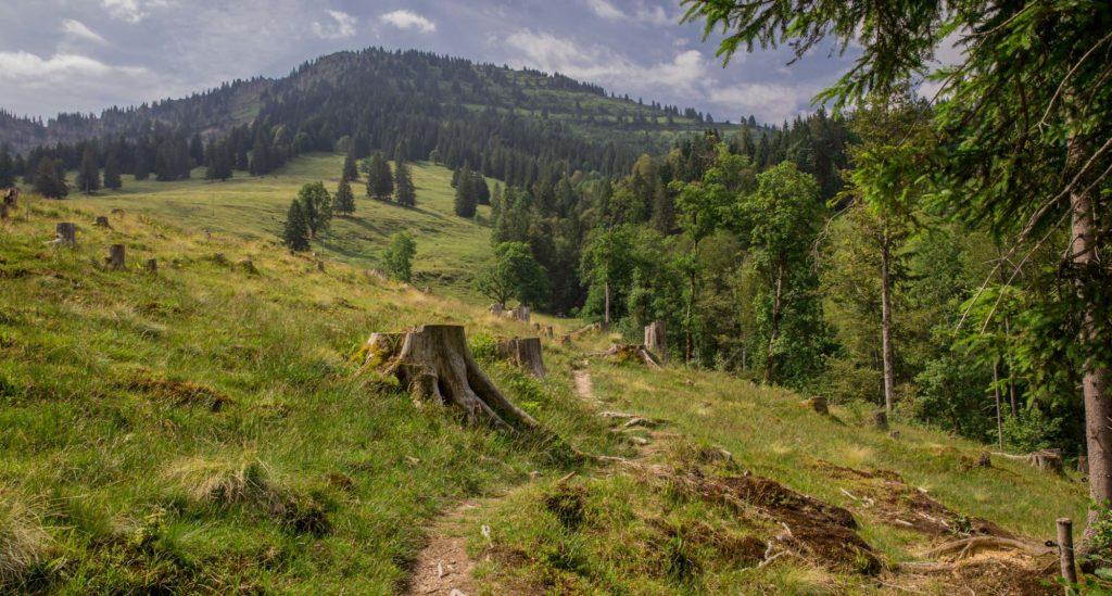 Alpenfreiheit Wanderung in Oberstaufen 23