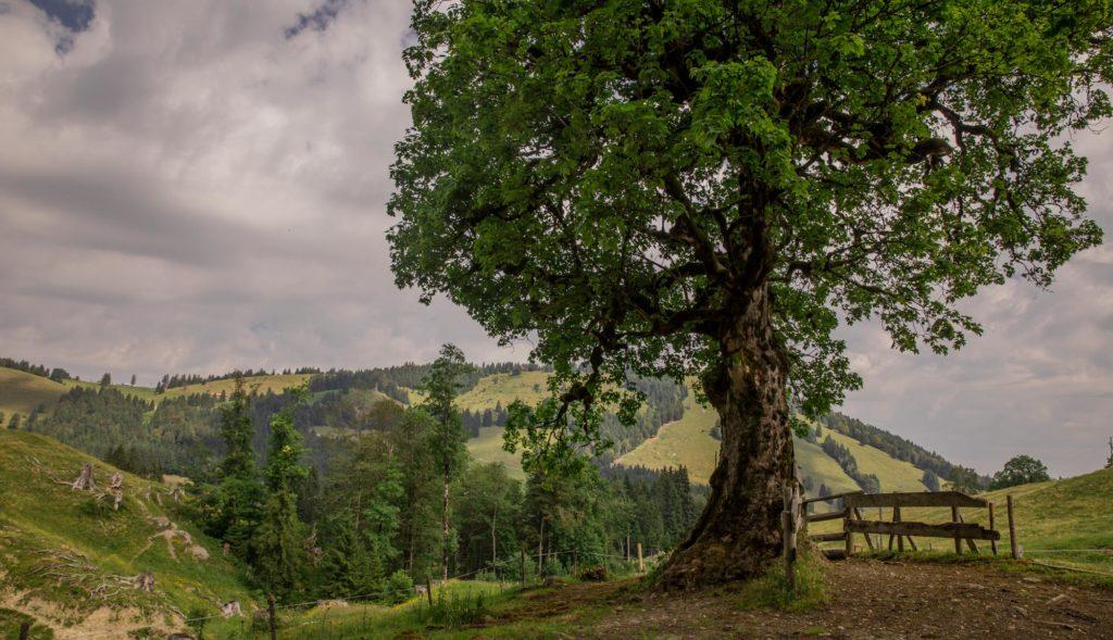 Alpenfreiheit Wanderung in Oberstaufen 24