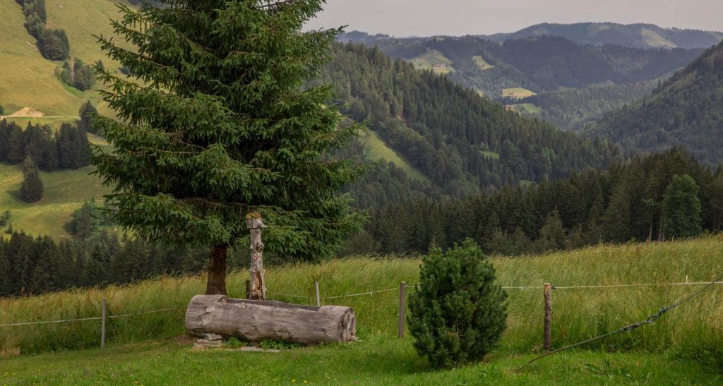 Alpenfreiheit Wanderung in Oberstaufen 25