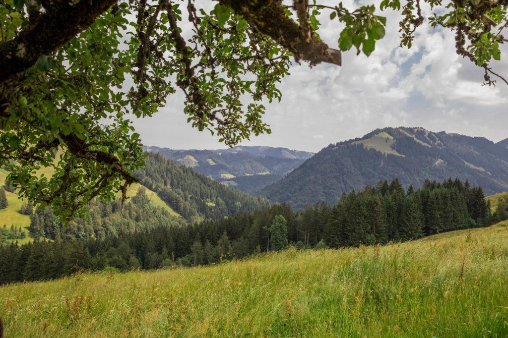 Alpenfreiheit Wanderung in Oberstaufen 26