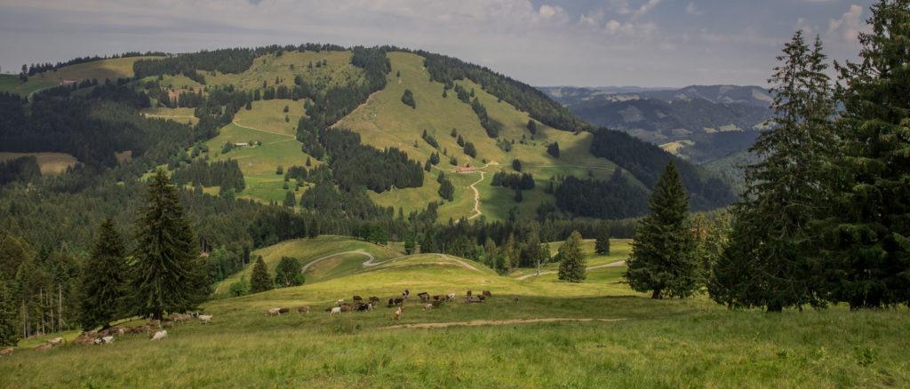 Alpenfreiheit Wanderung in Oberstaufen 30