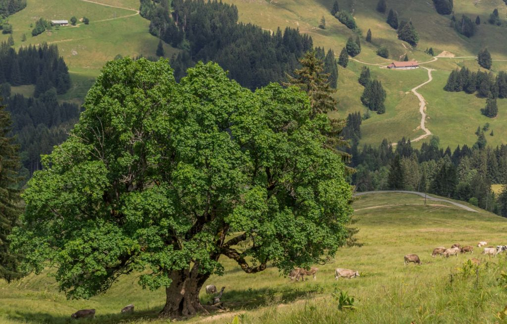 Alpenfreiheit Wanderung in Oberstaufen 31