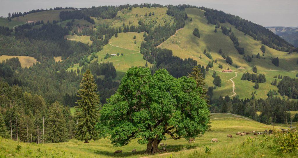 Alpenfreiheit Wanderung in Oberstaufen 32