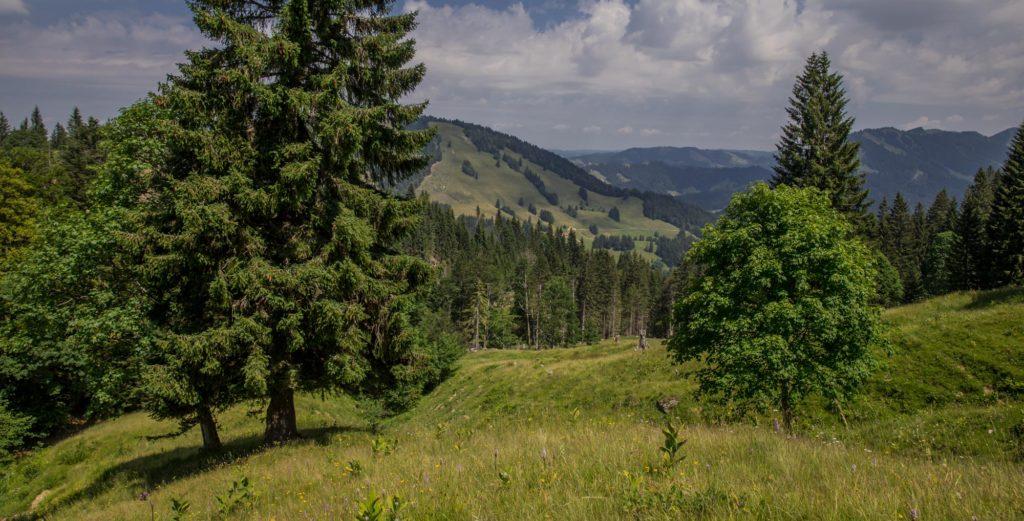 Alpenfreiheit Wanderung in Oberstaufen 36