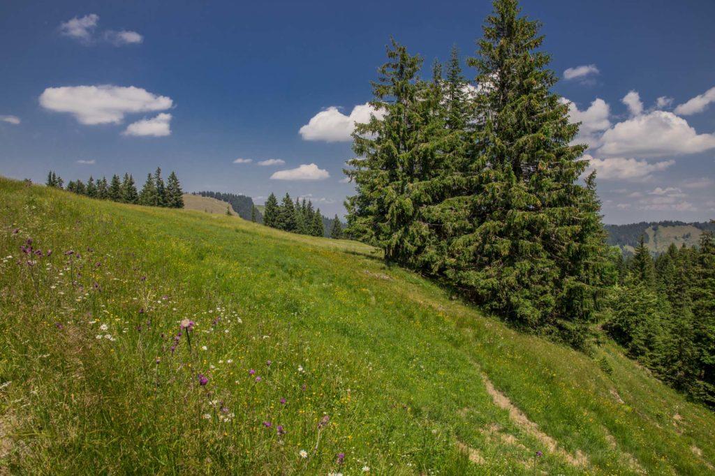 Alpenfreiheit Wanderung in Oberstaufen 40