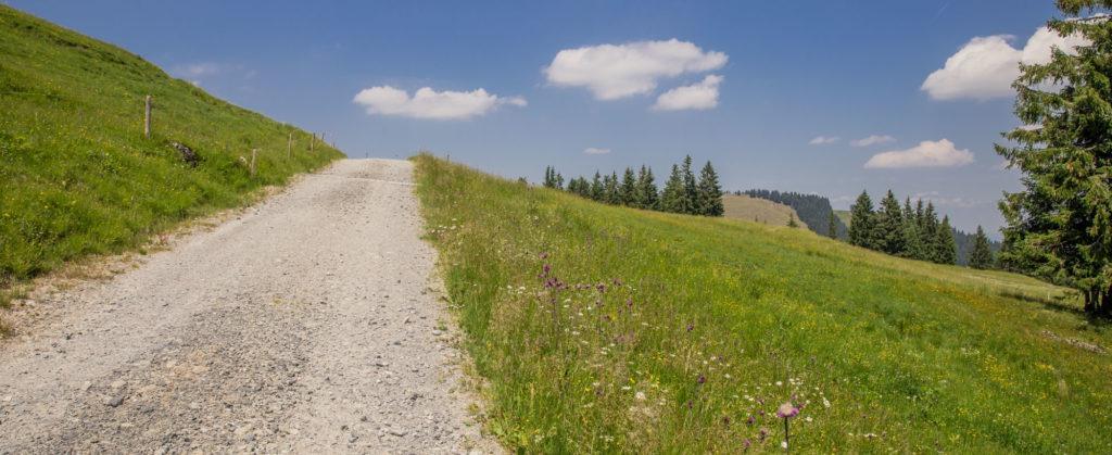 Alpenfreiheit Wanderung in Oberstaufen 41