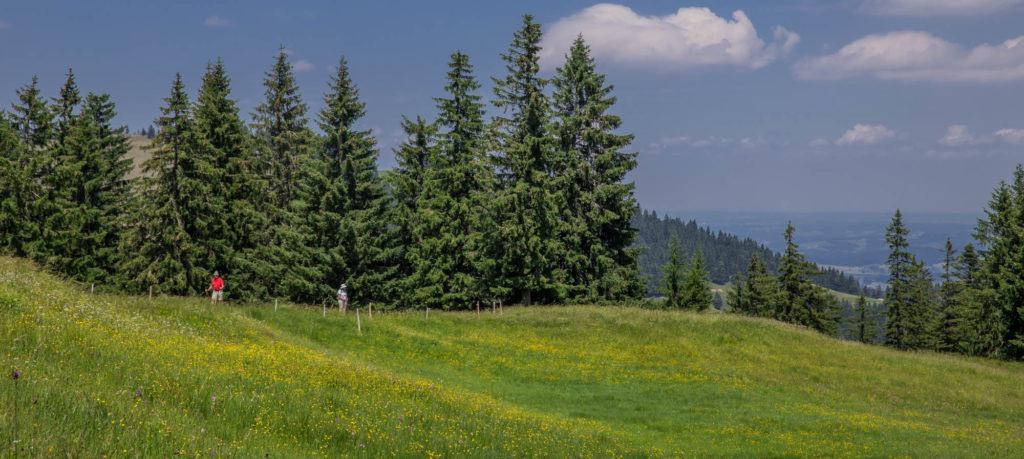 Alpenfreiheit Wanderung in Oberstaufen 43