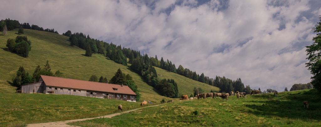 Alpenfreiheit Wanderung in Oberstaufen 16