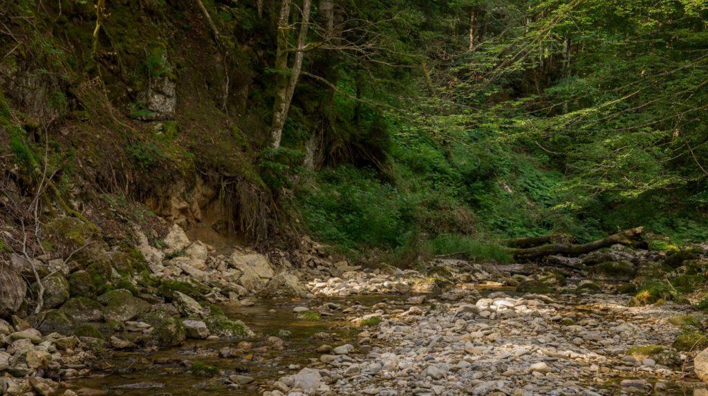 Alpenfreiheit Wanderung in Oberstaufen 17