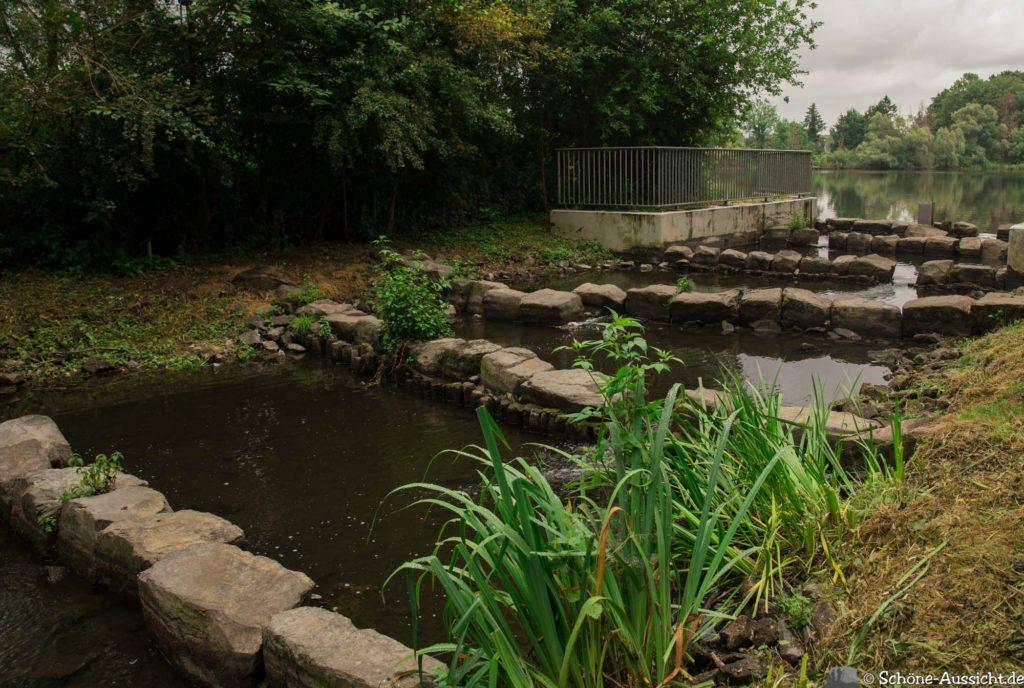 Nette Seen - Leichte Wanderung um 3 Seen in Schwalm-Nette 351
