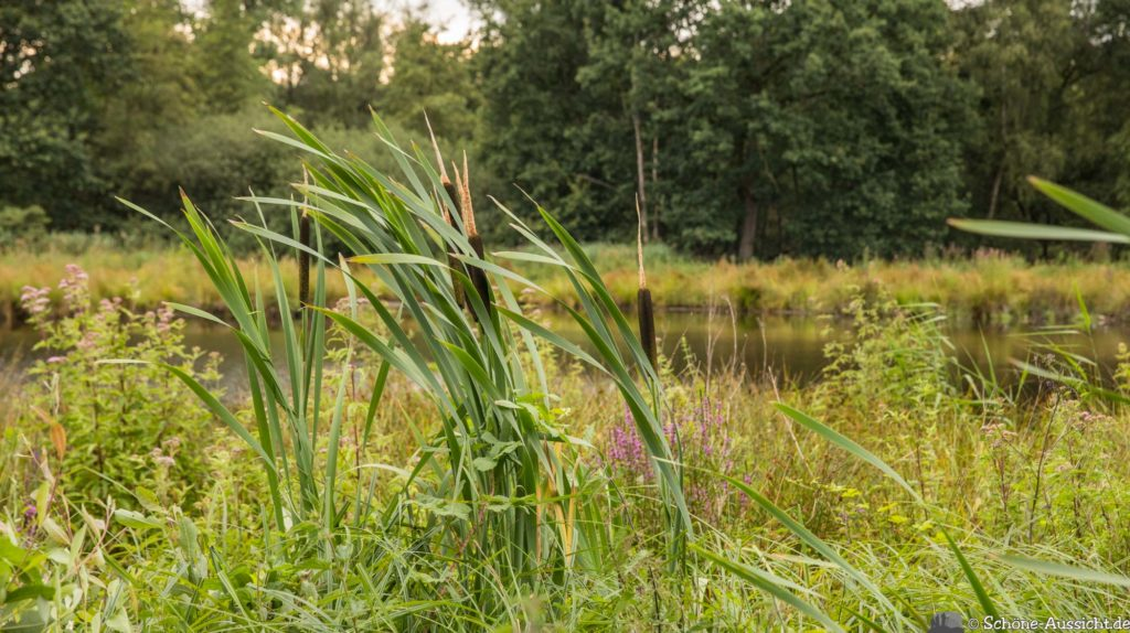 Nette Seen - Leichte Wanderung um 3 Seen in Schwalm-Nette 328
