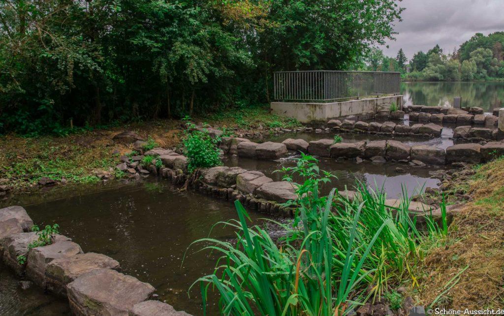 Nette Seen - Leichte Wanderung um 3 Seen in Schwalm-Nette 326