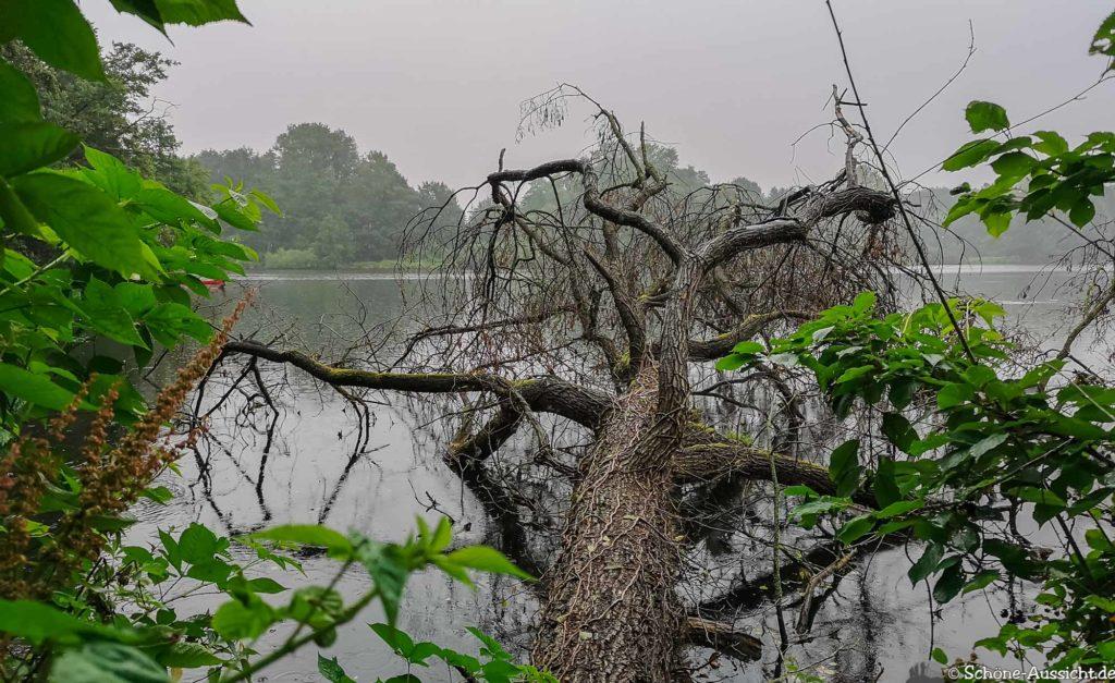 Nette Seen - Leichte Wanderung um 3 Seen in Schwalm-Nette 314