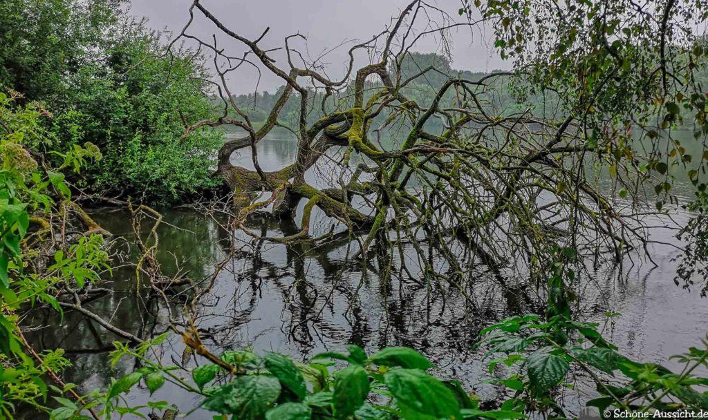 Nette Seen - Leichte Wanderung um 3 Seen in Schwalm-Nette 315