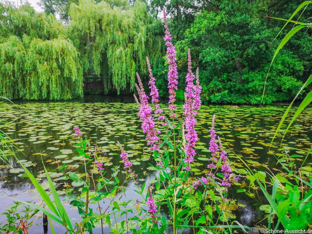 Nette Seen - Leichte Wanderung um 3 Seen in Schwalm-Nette 317