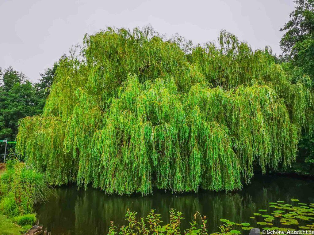 Nette Seen - Leichte Wanderung um 3 Seen in Schwalm-Nette 318