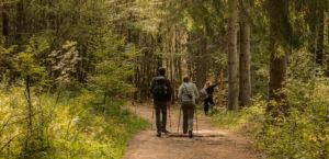 Trekkingstöcke für 24h Wanderungen 7