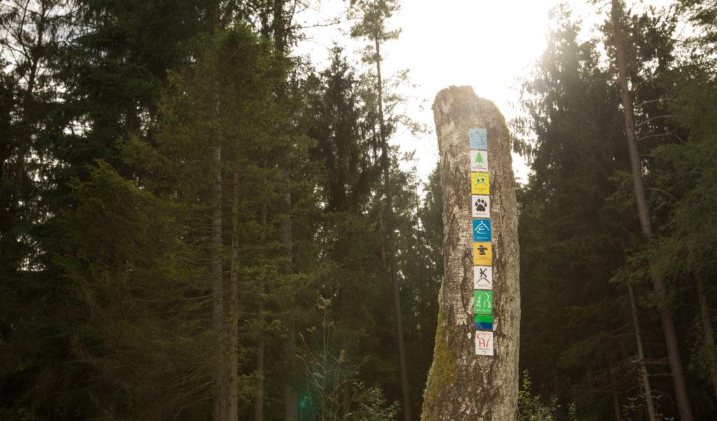 Kauert Tour im Dahner Felsenland 9
