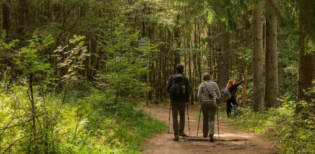 Kauert Tour im Dahner Felsenland 8