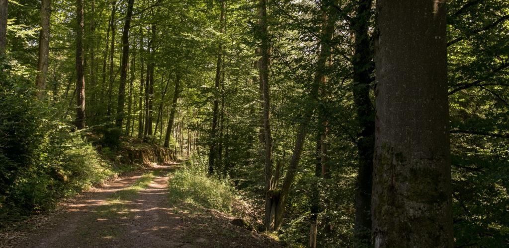 Rumberg-Steig 27