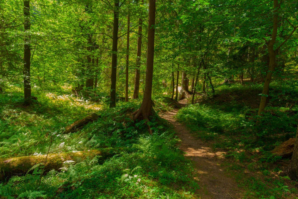 Der Obere Berggrabenweg 1