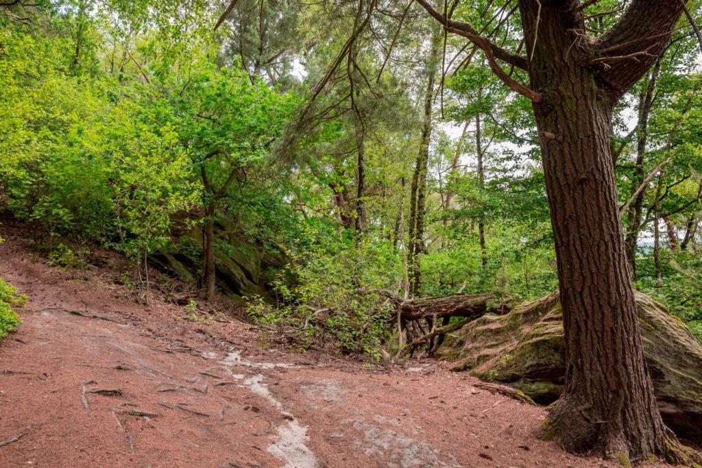 Waldauenweg 53