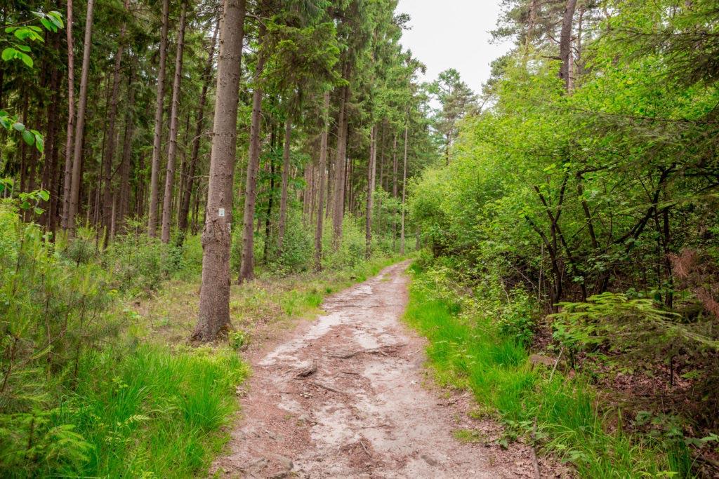 Waldauenweg 58