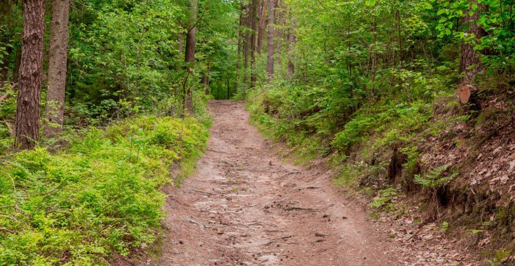 Waldauenweg 59